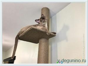 Когтеточка для кошки до потолка - 20688757_m.jpg