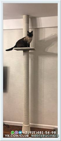 Когтеточка для кошки до потолка - 20689007_m.jpg