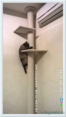 Когтеточка для кошки до потолка - 20688758_m.jpg